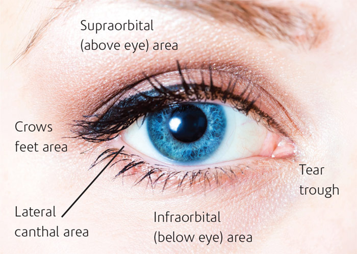 Eye+Area+Anatomy