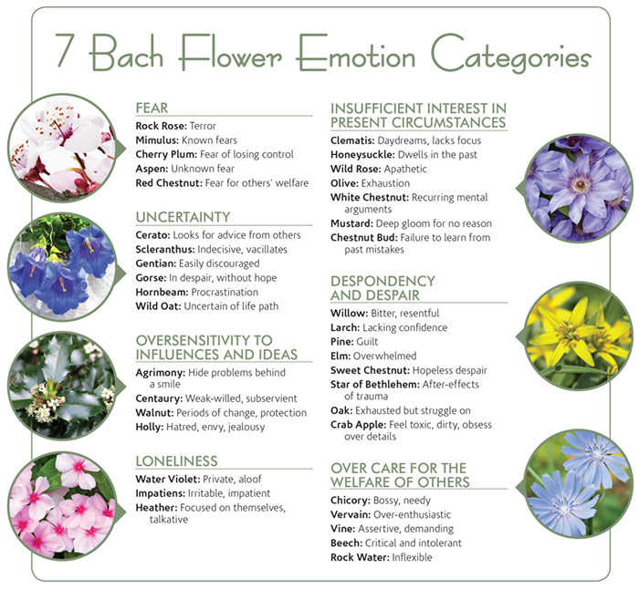 Bach+7+Categories+of+Emotions