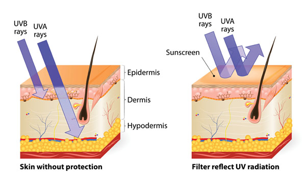 UV+Skin+Penetration+vs.+Protection