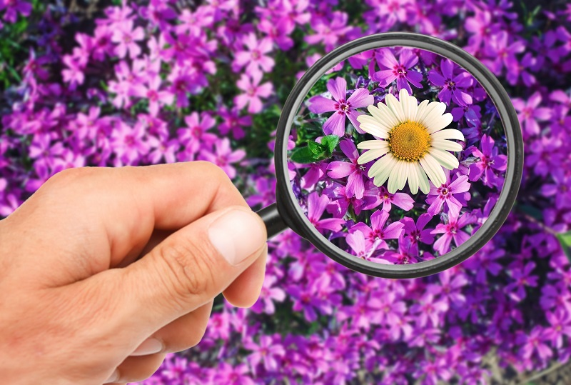 Picture of flowers and a magnifying glass